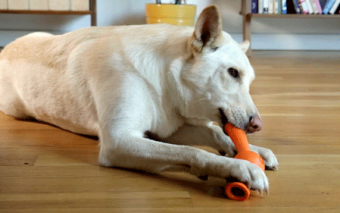StickBall: Ball + Stick for Dogs