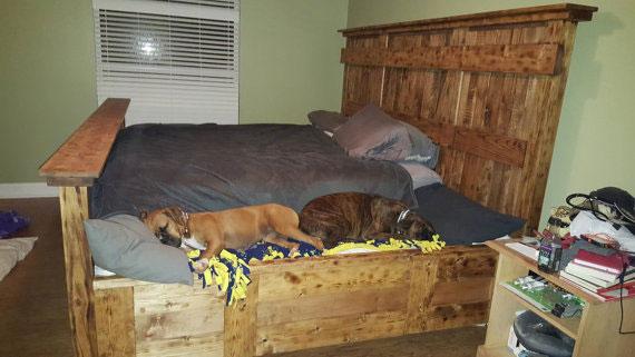 King Bed Dog