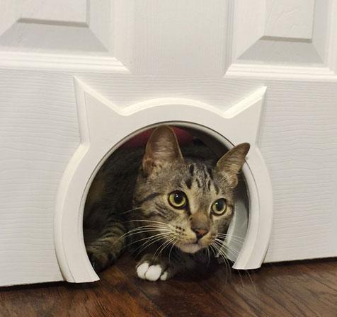 kitty-pass