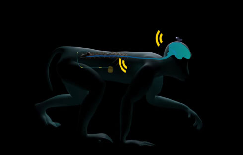 paralyzed-brain-limb-interface
